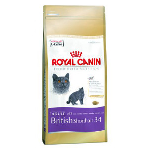 royal-canin-british-shorthair-34