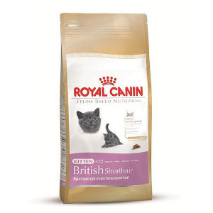 croquettes royal canin kitten british shorthair pour chat comparatif. Black Bedroom Furniture Sets. Home Design Ideas