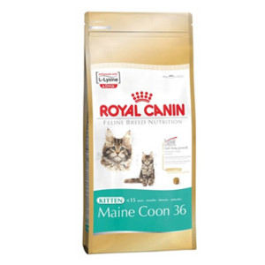 royal-canin-kitten-maine-coon-36
