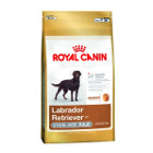 royal-canin-labrador-sterilised