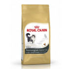 royal-canin-norvegien